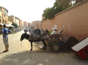 One of the many creatures used for labour in Africa. This photo was snapped in Marrakech but you find hundreds of these in Southern Africa, like Botswana.