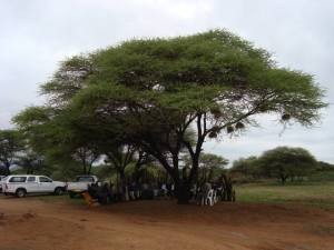The kraal was situated under the shade of a large tree where the men sat and talked.