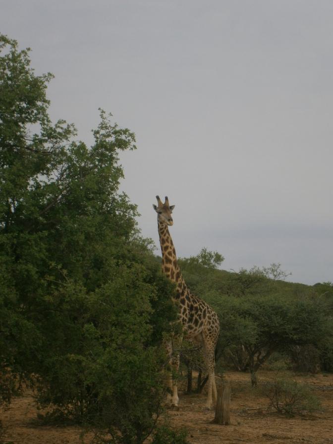 A Short Setswana Song